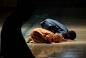 До 2030 року мусульманська молодь складе третину від усього молодого населення світу