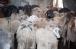 Більше двох тонн м'яса роздали нужденним в ІКЦ Києва