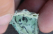 ©Думська: Під час розкопок в Акерманській фортеці знайдений паперовий тумар 300-річної давності