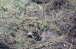 Фото великої вирви та хвостовика міни