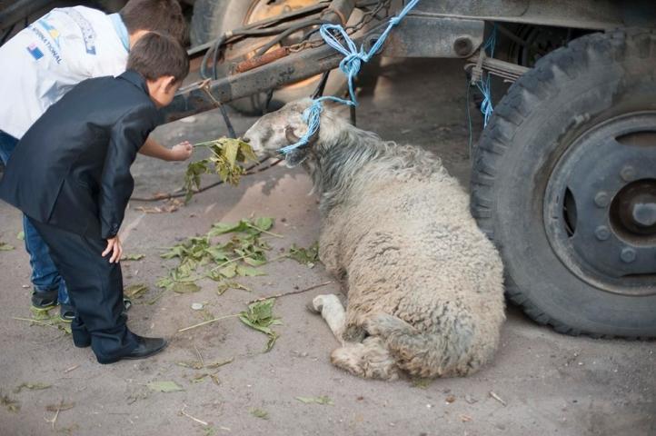 Eid al-Adha all over the Ukraine