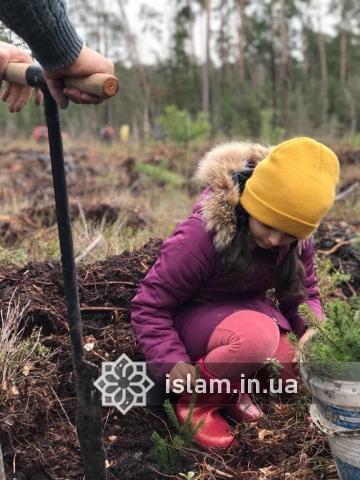 Благодаря усилиям украинских мусульман деревьев в стране стало больше