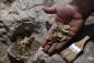 ©Live Science: Знайдений скарб золотих монет епохи Аббасидів