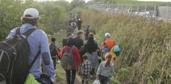 Чи хочуть сирійські біженці в Україну?