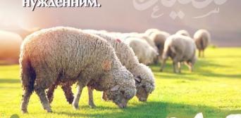 Українські мусульмани можуть делегувати громаді принесення жертви на Курбан-байрам
